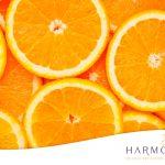 Conoce lo mejor de las naranjas
