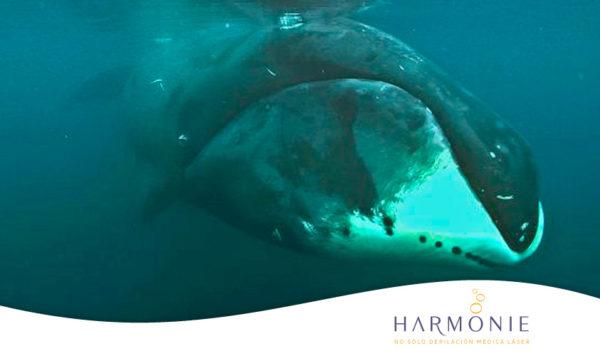 ballenas-longevidad.jpg